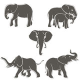 Set of elephants b&w Stock Photography