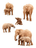 Set of Elephants Isolated on White Stock Image
