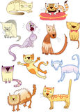 Set of eleven different cats Royalty Free Stock Photography