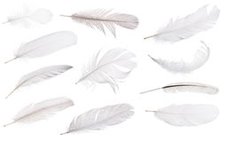Set of eleven light grey feathers isolated on white Royalty Free Stock Photos