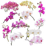 Set of eleven orchid floral branches on white Stock Photography