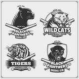Set emblematy, odznaki, logowie i etykietki z baseballa, tygrysem, panterą i żbikiem, ilustracja wektor