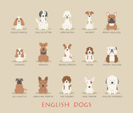 Set of english dogs Royalty Free Stock Photography