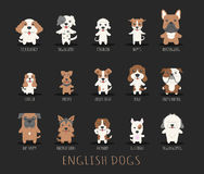 Set of english dogs Royalty Free Stock Photos