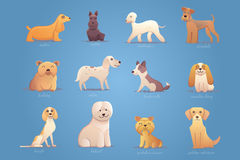 Set of english dogs Royalty Free Stock Photo