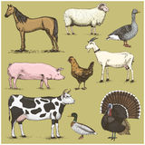 Set of engraved vintage domestic, farm animals include horse and sheep, cow . chicken. goat . turkey. pig. duck with Royalty Free Stock Photos