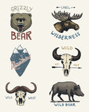 Set of engraved vintage, hand drawn, old, labels or badges for camping, hiking, hunting with moose, grizzly bear. boar Stock Photography
