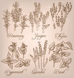 Set of essential herbs Royalty Free Stock Image