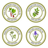 Set of essential oil labels angelica, iris, pistachio, five-flavor-berry. Vector illustration Stock Photography
