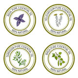 Set of essential oil labels: basil; tarragon; birch; helichrysum. Vector illustration Stock Photography