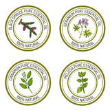 Set of essential oil labels: black spruce, geranium, cinnamon, m Stock Photography