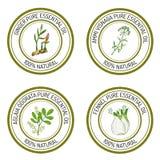 Set of essential oil labels: ginger, ammi visnaga, aglaia odorat. A, fennel. Vector illustration Stock Image