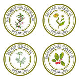 Set of essential oil labels: gum rockrose, inula, dill, gaulther Stock Photos