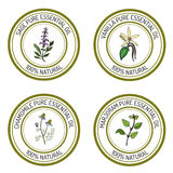 Set of essential oil labels: sage, vanilla, chamomile, marjoram Royalty Free Stock Photo