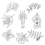 Set, essential oil plants 1 vector illustration