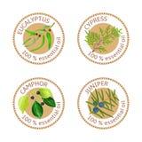 Set of essential oils labels. Eucalyptus, cypress, camphor, juniper Stock Image