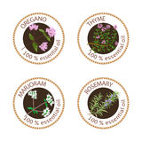 Set of essential oils labels. Oregano, Thyme, marjoram, rosemary Royalty Free Stock Photography