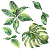 Set et of exotic watercolor green tropical leaves Royalty Free Stock Photography