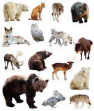 Set of european animals. Isolated over white Royalty Free Stock Photo