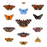Set of 13 european butterflies. Big set of the European butterflies isolated on a white. Comma, Woodland ringlet, Peacock, Common blue, Scarce copper, Red stock photography