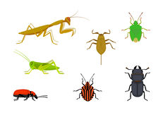 Set of european insects Royalty Free Stock Photos