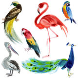 Set of exotic birds. Watercolor illustration in white background. Royalty Free Stock Photos