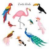Set of exotic birds on white background. vector illustration