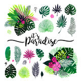 Set of exotic bouquet, tropical plants, palm leaves and flowers on a white background. Vector botanical illustration Royalty Free Stock Photography