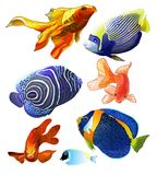 Set of Exotic Colorful Fish. Stock Image