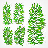 Set of exotic foliage. Vector illustration Royalty Free Stock Photos