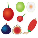 Set of exotic fruits. Stock Photos