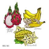Set of exotic fruits Stock Photo