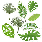 Set of exotic leaves from palm trees or tropical trees. Vector, illustration in flat style isolated on white background Royalty Free Stock Images