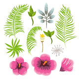 Set of exotic tropical flowers and palm leaves. Royalty Free Stock Image