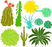 set för 01 kaktus Arkivbilder