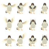 Set of Falcon Flat icons Stock Photos