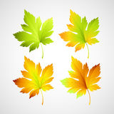 Set fall vector leaves for your design Royalty Free Stock Image