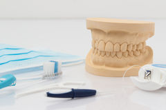 Set of false teeth with cleaning tools Royalty Free Stock Images