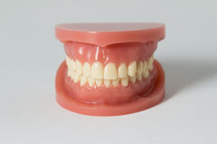 Set of false teeth on white Royalty Free Stock Photos