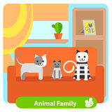 Set family cats in the room Royalty Free Stock Photo