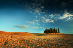 Sunset with famous trees in Tuscany near Montalcino Stock Image