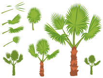 Set of fan palm round leaves. Fan Palm Tree formed from these leaves. Illustration on white background Royalty Free Stock Photos