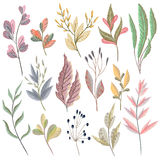 Set with fantasy plants and leaves. Decorative floral design elements Royalty Free Stock Images