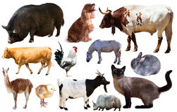 Set of farm animals royalty free stock image