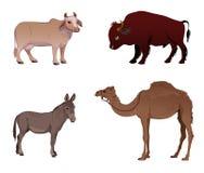 Set of farm animals. Cow, bull, camel, donkey Stock Photo