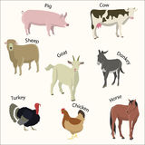 Set of farm animals. Flat style vector illustration Royalty Free Stock Image