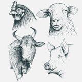 Set of farm animals. Set of  the heads  farm animals .Isolated on  white background.Vintage illustration.Hand drawn style Stock Photo
