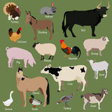 Set of farm animals icons. Flat style design Royalty Free Stock Image