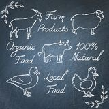 Set of farm animals icons and lettering on chalkboard. Collection of hand drawn farm animals icons and lettering on chalkboard Stock Photos