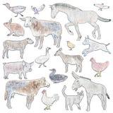 Set of farm animals Stock Photography